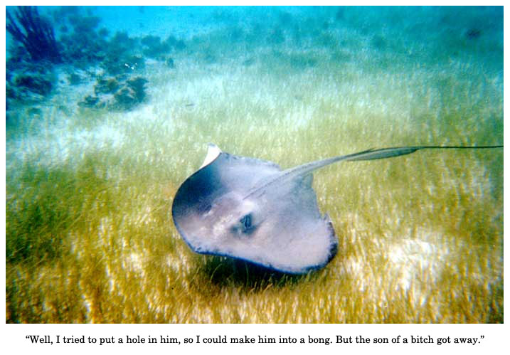 sting ray vs steve irwin