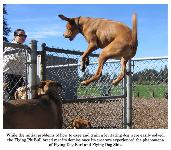 flying pit bull