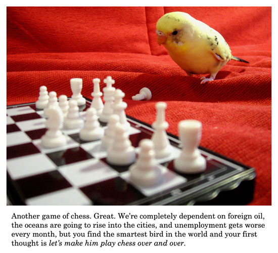 smartest bird in the world