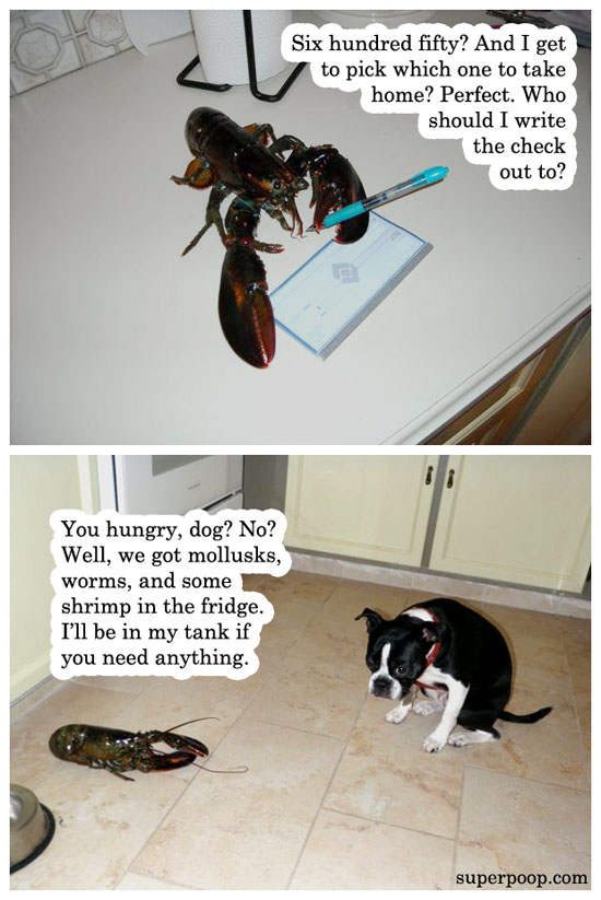 lobster pet