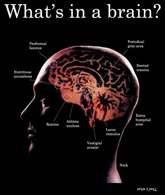 whats in a brain