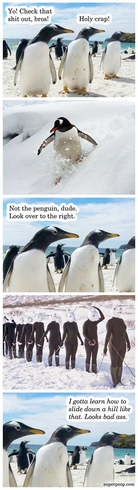 how to impress a penguin