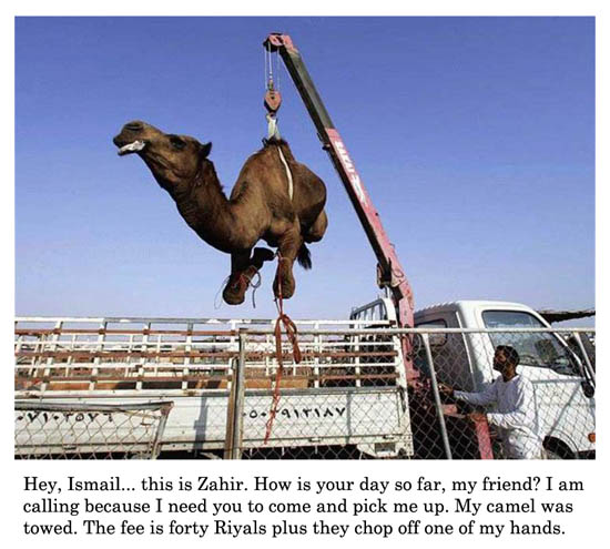 camel was towed