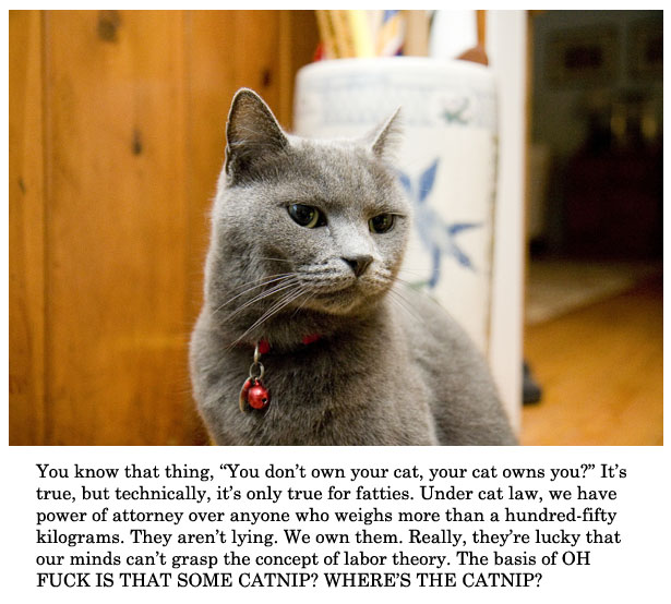 your cat owns