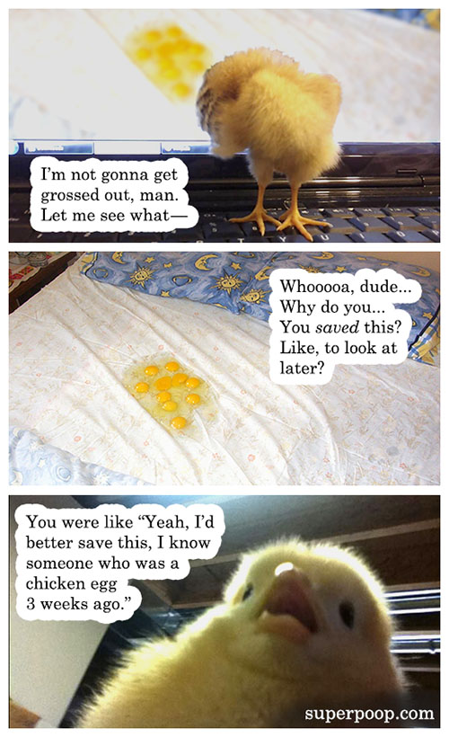 chicken and the egg